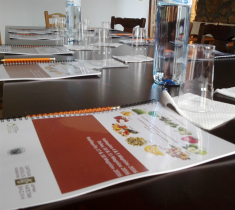The Promotion of the Flavor Characteristics of Olive Oil in Traditional Dining Venues in Messinia