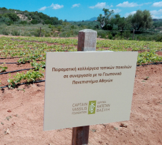 Collection and recording of local varieties in the prefecture of Messinia