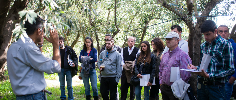 Educational seminar on olive oil production
